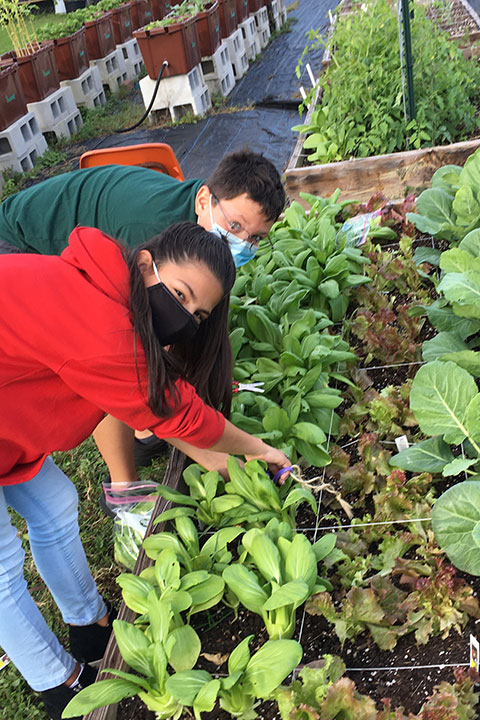 Two students showing vegetables growing in the garden at Sugar Mill Elementary